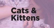 Cats and Kittens / Paw-some! Welcome to the cat club, where we cover all things fancy and feline. From classy cat beds to pretty scratching posts, we're covering smart and stylish ways to keep cats in your life.