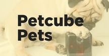 Petcube Pets / Who want's to be a super meow-del? These cats, dogs, and even some lizards and pigs, are pulling off their best blue steel and modeling Petcube pet cameras.