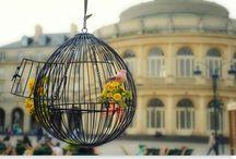 Ouvrez la cage aux oiseaux .....