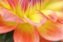 Flora / #flora #flowers #plants #nature