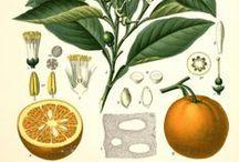 Fruits inspiration / Czasami zapominamy, że kosmetyki powstają z użyciem tego, co najlepsze w przyrodzie, w tym słodkich owoców. Laboratorium Kosmetyczne Joanna słynie z kosmetyków o owocowych zapachach i ekstraktach.