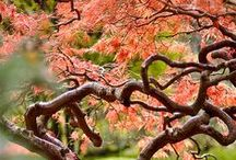 Outdoor / Starry nites, gardens, animals