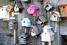 Birdhouses /// Ptačí budky