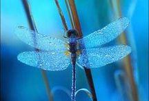 Dragonfly /// Vážky
