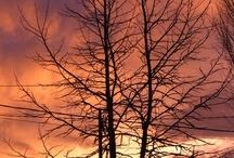 Árbores / Fotos de Fran Alonso sobre árbores.