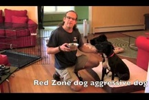 DIY Dog Training Videos / Jeff Gellman is a nationally known dog trainer who travels the country educating and practicing his Real World dog training lifestyle system that works for all breeds and all families. Jeff may be nationally known, but he got his start Dog Training in Rhode Island.