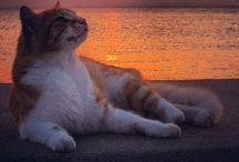 Stunning Sunrise Sunsets / Sunshine! images