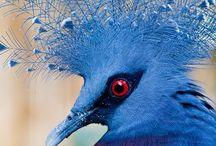 Beauteous & Beautiful Birds / Gorgeous Photos/ Illustrations