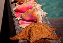 She sells Seashells / Sanibell, sunshine,sand, seashells = heaven