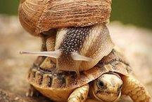 saligaria  snails & tortoise