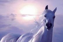T - Pferde / cavalli / horses / chevaux / by Rita Runggaldier