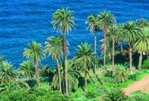 Canarian Flora & Fauna / The landscapes of the Canary Islands are full of colours and beautiful animals and plants.