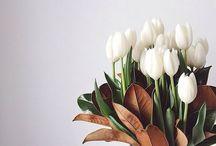 TulipTulip