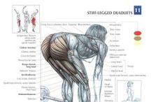 筋トレ / 肉体関連 Muscle