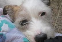 Our puppy / <3