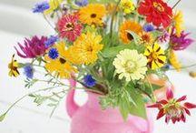 цветы природа