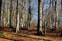 Arboles / Arbores del mundo