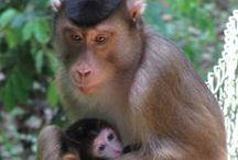 """Animales / Animales diversos, excepto los del género """"homo sapiens"""""""