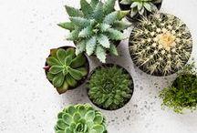 ▲ J'♥ les cactus / Cactus ans Plants are so cute ; many decorating ideas. Les plantes et les cactus sont adorables, de jolies idées et conseils décoration avec une touche de vert ! http://auriginalite.com