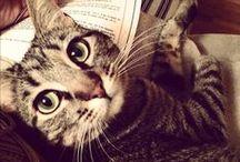 Crazy Cat Lady / by Rebecca Smith