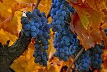 "The Ripening Vine / ""Thy wife shall be as a fruitful vine by the sides of thine house..."" ~Psalms 128:3 KJV.  ""I say to myself, 'Be patient with time. It's the fruit just ripening on the vine."" ~Anonymous.  ""People pretend not to like grapes when the vines are too high for them to reach."" ~Marguerite De Navarre ( 1492-1549) wife of King Henry II.  ""I am the vine, ye are the branches: He that abideth in me, and I in him, the same bringeth forth much fruit: for without me ye can do nothing."" ~John 15:5 (KJV)"