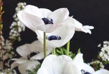 Flowers // Plants