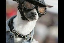 fun dogs & animals