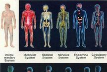 Resources for Medical & Scientific Translators/Interpreters