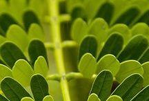 couleur de l'herbe jeune
