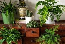 Plants For Home Decor / Plants make a happy home, but they've got to be real! #urbanjungle