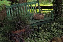 Garden and more...