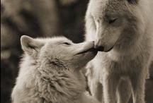 Cute Animals <3 / <3 <3 <3
