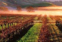 Vineyards in The World / vineyards distributed around the world
