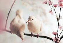 Birds and flowers <3 / Spring time