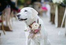 Dogs / Ich liebe Hunde und ich habe selbst die süßeste Hündin der Welt: Emma.