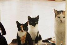 Animals / yavru kediler ve köpekler
