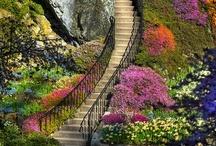 Gardening Ideas / by Suki Leon