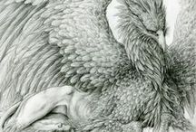 Wings and Feathers / by Deb