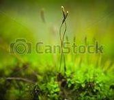 Breathtaking mossy