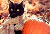 Autumn ^^