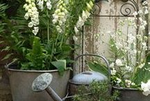 Zinc in garden