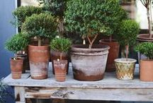 Love those clay pots