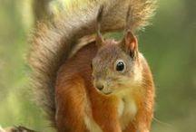 Love Squirrels & Chipmunks