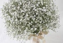 かすみ草 gypsophila / ys floral deco