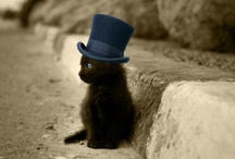 Top Hats / Everything is better in a top hat