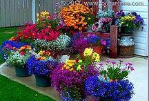 Flowers {Make Me Smile!!!} / by Karen Marie Reynolds