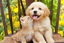 Cats & Dogs {Fuzzy Kids!!!} / by Karen Marie Reynolds