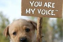 ❤ We Are Their Voice ❤ / by Toni Lange