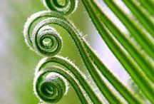 La nature... autrement / A nos yeux endormis se révèlent, dans l'exercice patient de l'observation, tant de merveilles...