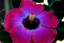 Gardens & Flowers / by Toni Lange
